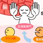 【ケトン体とは】ケトン体の役割・体内での働きとは??