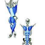 【ファンクショナルライン】力強い運動機能の原点「ファンクショナルライン」の位置と役割:Anatomy Train Functional Line