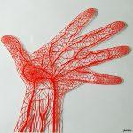 【血管(血流)とストレッチ】ストレッチによって起こる血管の変化とは!?