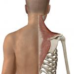 【筋肉のほぐし方】セラピストなら知っておきたい!筋肉をほぐすための実践的ノウハウとは?